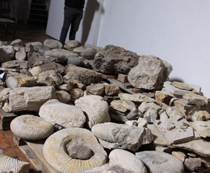 Rwimbledon-psqt-fossil-record